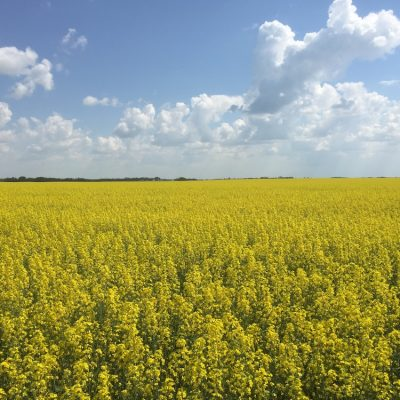 China's concerns about Canadian canola are legitimate, and we're going to have to deal with them sooner or later